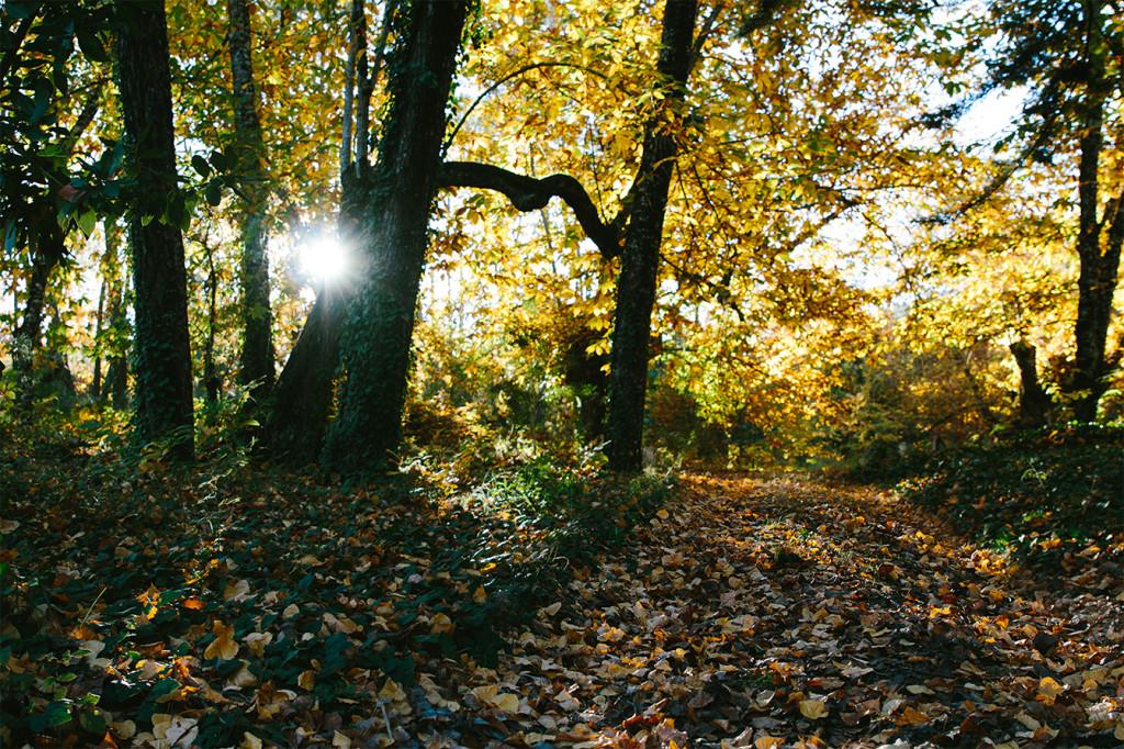 21-dias-de-otoño-2