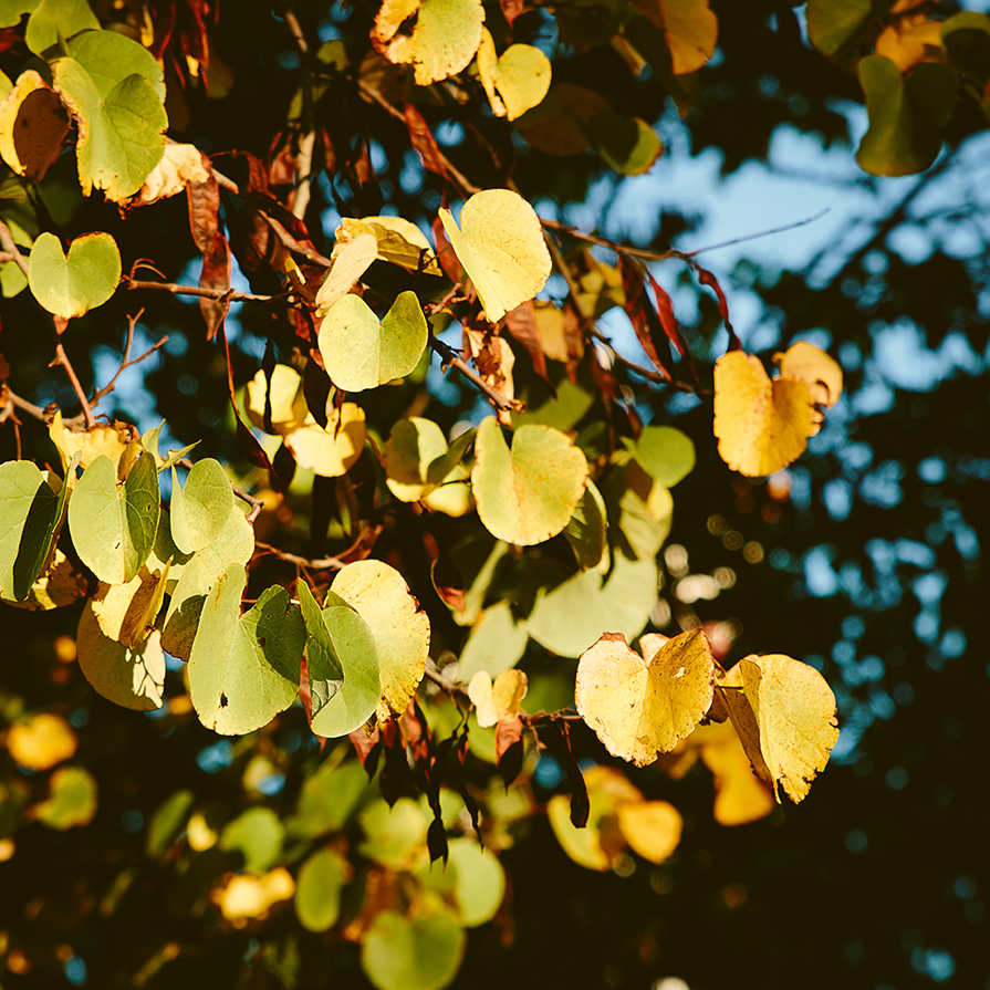 21-dias-de-otoño-4