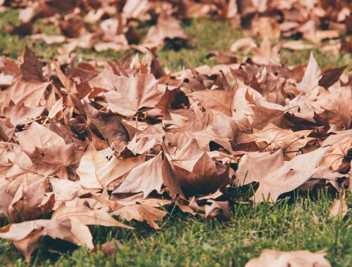 alt-21-dias-de-otoño-17